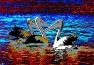 peter_west_three_pelicans_1