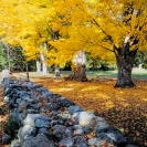 Hemant Kogekar  Fall Colours