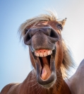 Patricia Beal  Horse Laugh