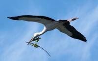 Tim Collisbird Nesting