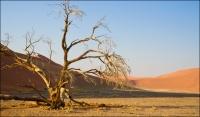 Rosemary Cox  Namib Desert