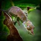 Ralph Hilmer Chameleon