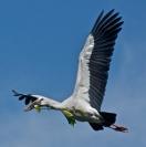 Rosslyn Duncan Nesting Crane