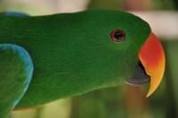 Robbie Geyer  Green Parrot