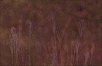 Anna Pha  Windmill Grass