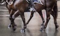 Patricia Beal 8  Legs In Rain