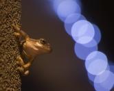 Michael Matthews  Christmas Frog Merit
