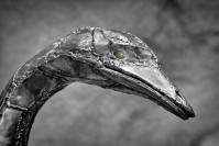 Phil Cargill  Silver Emu