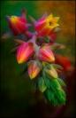 Bob Green Succulent2 Credit