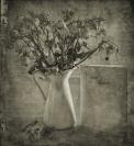 Lucie Loane  Send Flowers