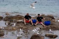 Yvonne Dodwell  Feeding The Gulls