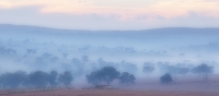Lucie Loane  Misty morning  Credit