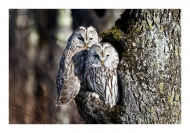 chris_chau_two-owls