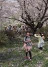 Credit_fujiko_watt_dancing_in_cherry