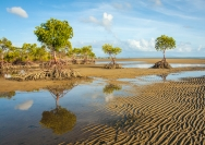 phil_cargill_mangroves_1