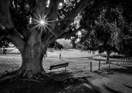 Steve_Mullarkey_Monring Run - Waverton Park_1