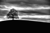Credit_Jochen_Hess_lonely_Tree