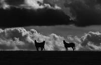 joslyn_davis_wild_horses