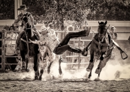 Credit_Michael_Hing_Steer_Wrestling