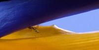 anna_pha_creeping_ant
