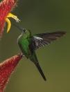 eric_lippey_hummingbird