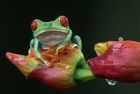 Merit_eric_lippey_treefrog