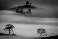 jim_wilson_morning_fog_1