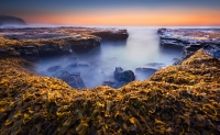 Merit_ProjIm_of_the_Night_Glen_Parker_Pile_Of_Seaweed_1
