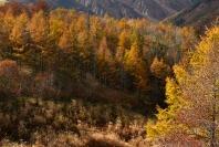 Fujiko_Watt_Autumnal_Forest