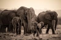 Merit_Michael_Hing_Elephant_March2