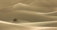 Merit_ralph_hilmer_dunes