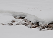 joslyn_davis_snow_texture