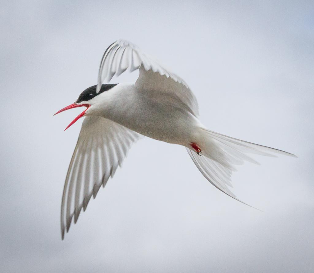 patricia_beal_elegant_flight