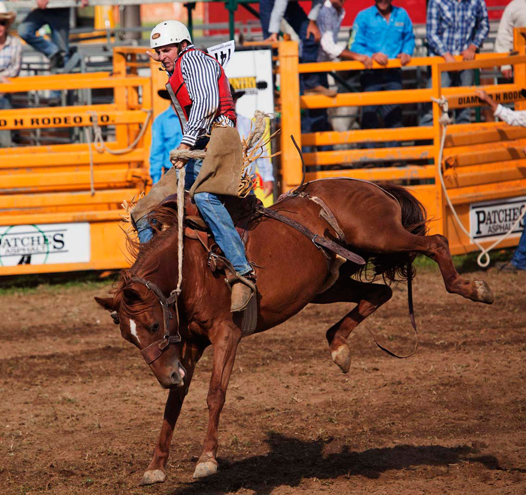 A Weekend In Canberra Amp The Queanbeyan Rodeo Norths