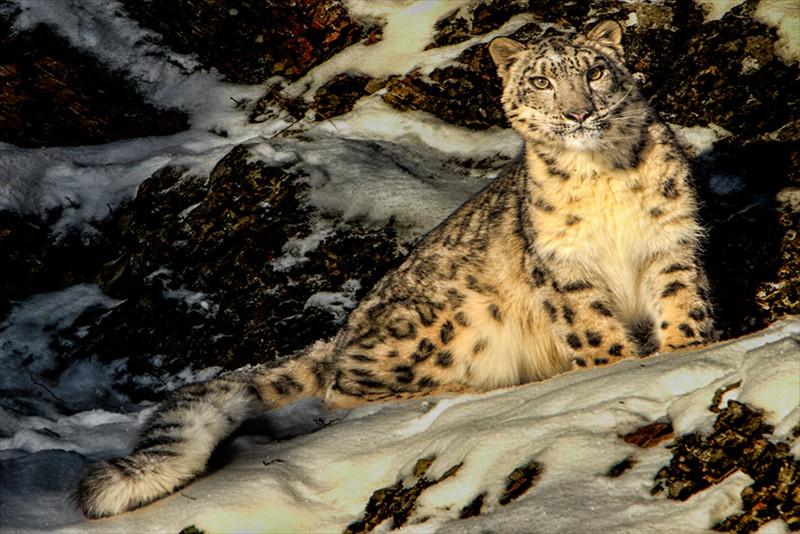 Eric Lippey Montana Leopard