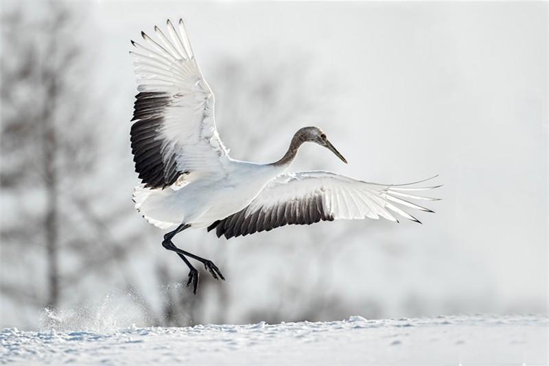 Kerry Boytell Dancing Crane