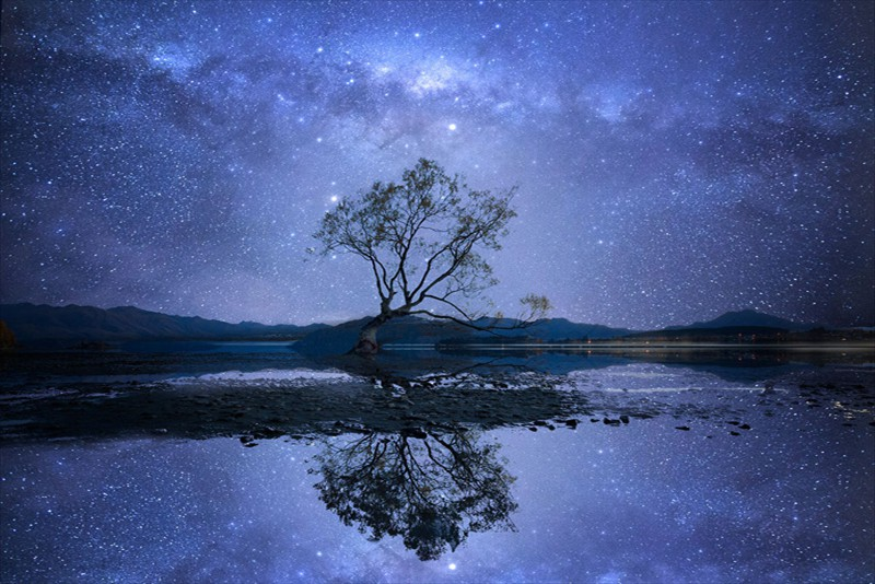 Kerry Boytell Wanaka Tree Nightshow