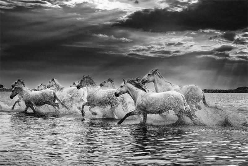 Eric Lippey Wildhorses