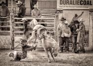 Michael Hing Gentle Horse Ride  Merit