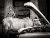 Man,Cow and Car