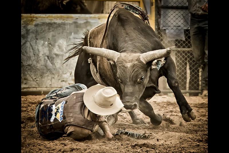 Les Atkins Angry Bull